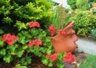 What are your earliest garden memories?